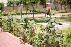 Plantação de várias flores e plantas Foto de Stock Royalty Free