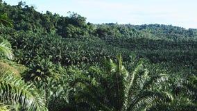 Plantação do óleo de palma no png video estoque