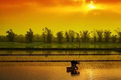 Plantação do arroz do fazendeiro de Vietname Foto de Stock Royalty Free
