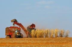 Plantação do cana-de-açúcar imagem de stock royalty free
