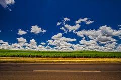Plantação do cana-de-açúcar ao lado da estrada sob o céu azul com nuvens fotos de stock