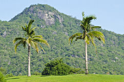 Plantação do coco Fotografia de Stock Royalty Free