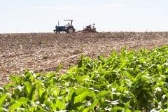 Plantação do feijão de soja Imagens de Stock