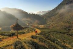 A plantação do fotógrafo e de chá Fotos de Stock Royalty Free