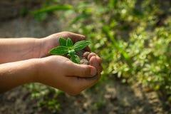 Plantação do menino Foto de Stock Royalty Free