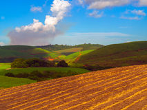 Plantação do Sugarcane Foto de Stock