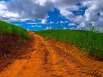Plantação do Sugarcane Imagens de Stock Royalty Free