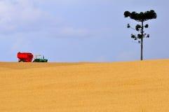 Plantação do trigo fotografia de stock