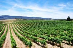 Plantação do vinhedo no Alentejo, Portugal Fotografia de Stock