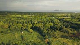 Plantação e jardim aéreos do fruto da paisagem no campo verde na vila asiática Voo do zangão sobre o jardim tropical e filme