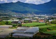 Plantação em montanhas de Dalat, Vietname Fotografia de Stock
