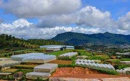 Plantação em montanhas de Dalat, Vietname Foto de Stock Royalty Free