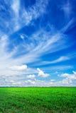 Plantação maravilhosa da soja e céu azul Foto de Stock