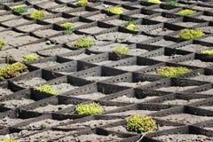 Plantação na inclinação Fotos de Stock Royalty Free