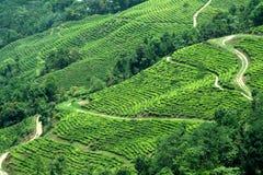 Plantação na inclinação de montanha Imagem de Stock Royalty Free