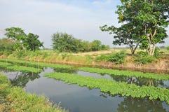 Plantação na lagoa Fotos de Stock