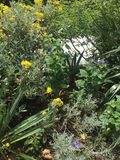 Plantação natural do jardim Fotos de Stock Royalty Free
