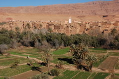 Plantação no desfiladeiro Marrocos da garganta imagem de stock royalty free