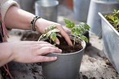 Plantação no jardim imagens de stock