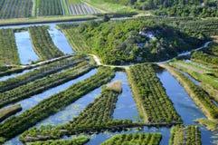 Plantação radial Fotografia de Stock Royalty Free