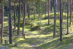 Plantação Thy Dinamarca Fotografia de Stock Royalty Free