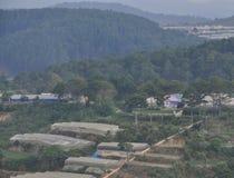 Plantação vegetal em Dalat, Vietname Fotos de Stock