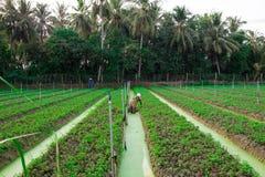 Plantação vegetal em Vietname fotografia de stock royalty free