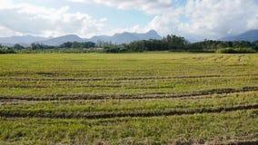 Plantação verde Imagem de Stock