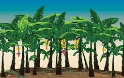 Plantações de banana bonitas na atmosfera brilhante do céu Foto de Stock Royalty Free
