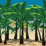 Plantações de banana bonitas no céu brilhante Exploração agrícola da banana Foto de Stock
