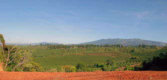 Plantações de café com Mounta Imagem de Stock