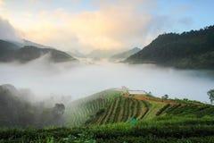 Plantações de chá 2000 foto de stock royalty free