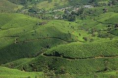 Plantações de chá de Munnar imagem de stock royalty free