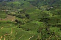 Plantações de chá de Munnar foto de stock royalty free