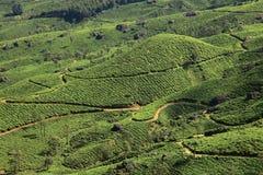 Plantações de chá de Munnar imagens de stock royalty free