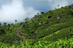 Plantações de chá de Sri Lanka - de Haputale imagem de stock royalty free