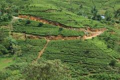 Plantações de chá de Sri Lanka em Nuwara Elliya fotografia de stock royalty free