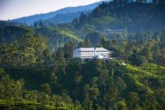 Plantações de chá em Ella, Sri Lanka foto de stock royalty free
