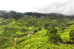 Plantações de chá nas montanhas de Cameron Fotografia de Stock Royalty Free