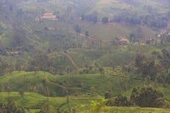 Plantações de chá no Kandy à viagem de trem de Ella - Sri Lanka foto de stock royalty free