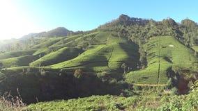 Plantações de chá de Sri Lanka filme