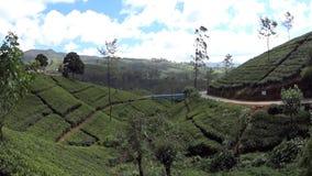 Plantações de chá de Sri Lanka vídeos de arquivo
