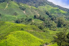 Plantações de chá verde de Cameron Highlands em Malásia imagem de stock