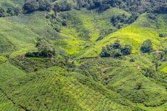Plantações de chá verde de Cameron Highlands em Malásia fotografia de stock royalty free