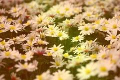 Planta à terra da coberta em matiz macias foto de stock royalty free