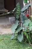 A planta é chamada antúrio, versão 5 fotografia de stock royalty free
