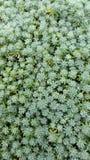 A planta é verde Imagens de Stock
