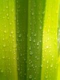 Planta 1 da abstracção Imagem de Stock Royalty Free