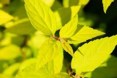 Planta Imagens de Stock
