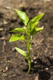 Planta Imagem de Stock Royalty Free